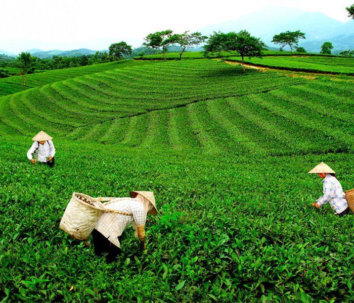 Thetealab ra mắt website bán trà ngon