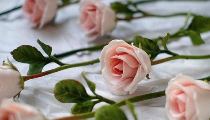 Chọn hoa hồng tốt nhất