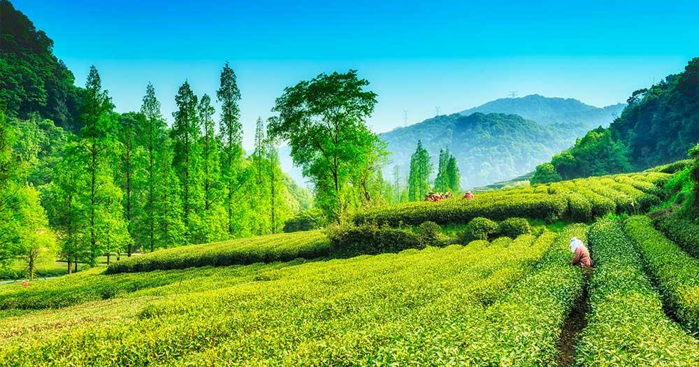 Đất cung cấp nhiều dưỡng chất cần thiết cho cây trồng