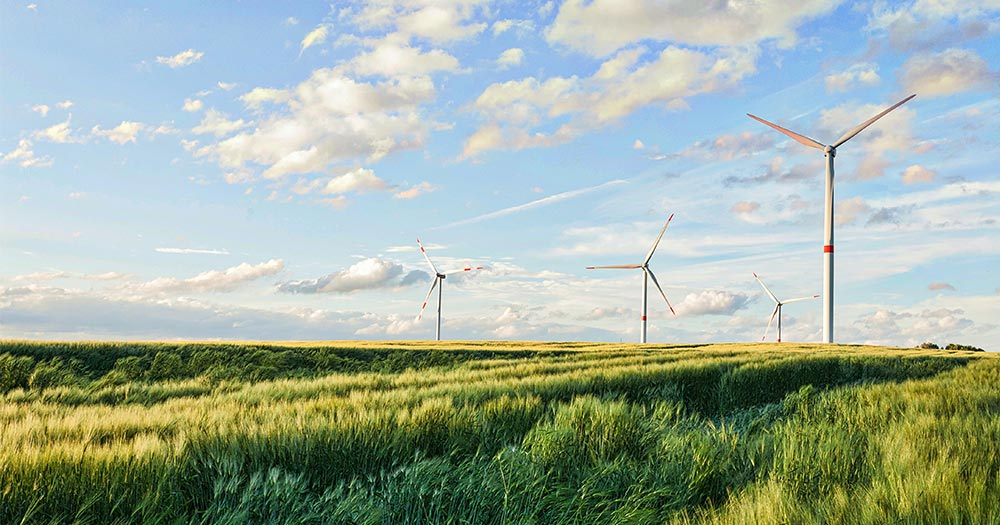 Gió có ảnh hưởng đến quá trình sinh trưởng của cây trồng