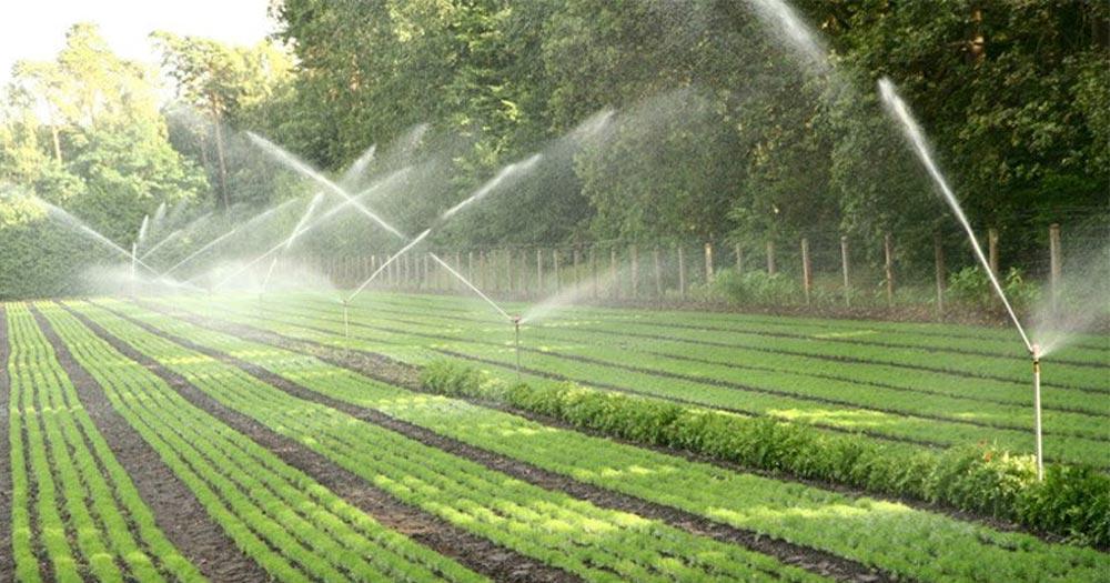 Lượng nước ảnh hưởng đến sinh trưởng phát triển cây
